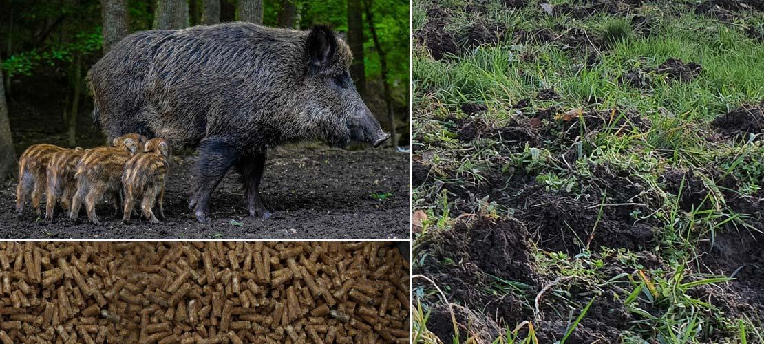 Wildrepell | Wildschweinabwehr