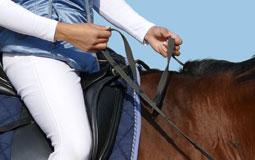 Kleine Grafik zum Thema Reitsport mit einer Frau, die auf einem braunen Pferd reitet