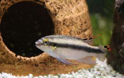Kleine Grafik zum Thema Tierbedarf mit einem Fisch vor einer Höhle im Aquarium