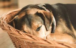 Kleine Grafik zum Thema Tierbedarf mit einem Hund in einem Hundebett liegend