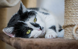 Kleine Grafik zum Thema Tierbedarf mit einer Katze auf einem Katzenbaum liegend