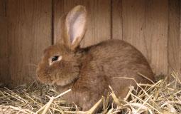 Kleine Grafik zum Thema Tierbedarf mit einem Kaninchen in einem Holzstall