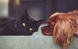 Kleine Grafik zum Thema Bücher mit einer schwarzen Katze und einem braunen Hund