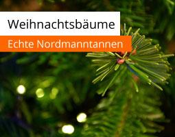 Kleine Grafik zum Thema Weihnachtsbäume mit einem grünen Tannenzweig