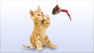 Produkte aus der Kategorie Katzen ansehen