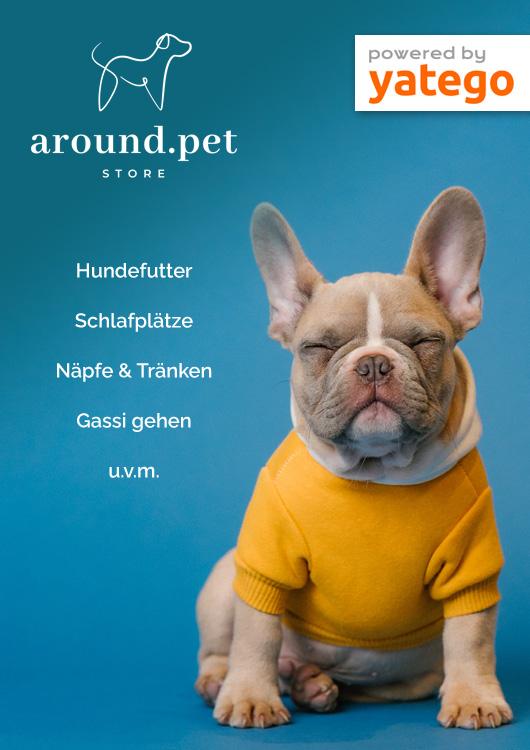 Vibes-Kachel zum Thema Hundebedarf mit einem kleinen Hund, der einen gelben Pullover trägt und vor einem blauen Hintergrund sitz