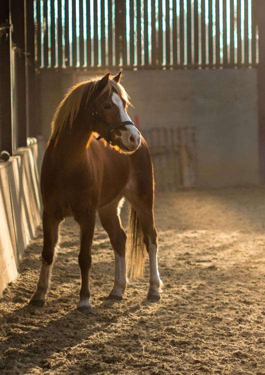 Vibes-Kachel zum Thema Pferde mit einem braunen Fohlen in einem großen Stall stehend