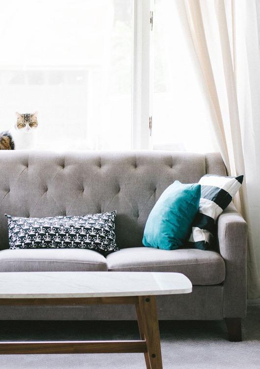 Hellgraues Sofa mit drei Kissen und einer Katze im lichtdurchflutetem Raum